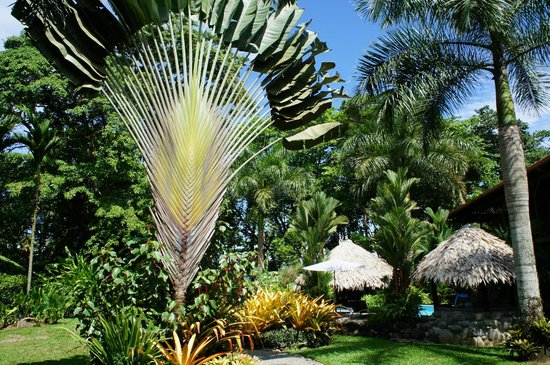 Hotel Banana Azul: Lush tropical landscaping