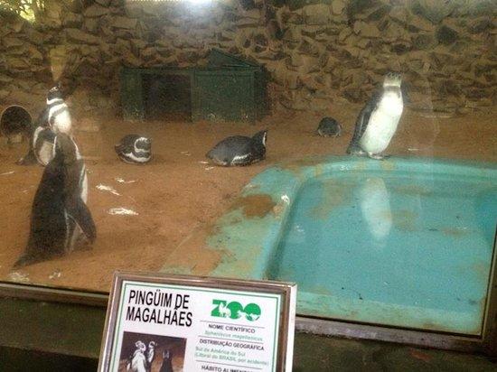 Parque Zoologico Municipal de Bauru: Pinguim no Zoo de Bauru