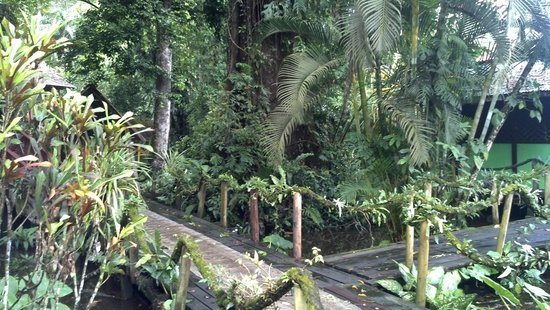 Hotel Yare : Jungle enchantment