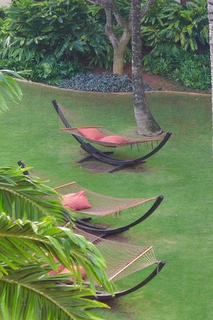 Courtyard Kaua'i at Coconut Beach: Free-standing hammocks on the grounds (view from our room)