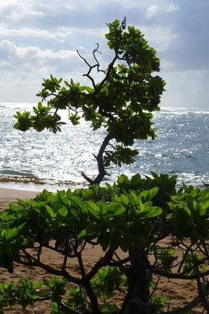 Courtyard Kaua'i at Coconut Beach: The beach at the hotel