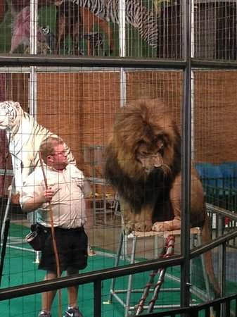 Big Cat Habitat and Gulf Coast Sanctuary: A great show