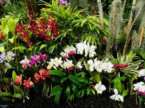 Foster Botanical Gardens: Foster Botanical Garden