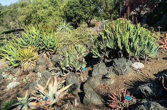 San Luis Obispo Botanical Garden: Plants