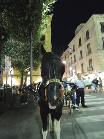 Piazza Tasso : Carriage rides