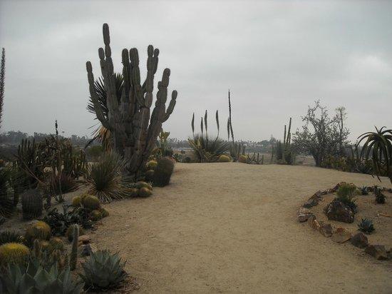 San Diego, TX: Cactus scene 1