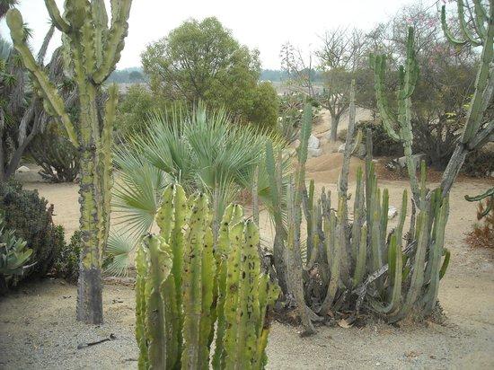 San Diego, TX: Cactus scene 3
