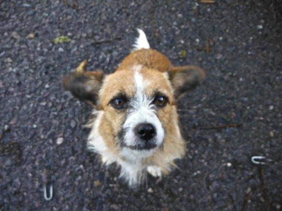 Bells Farm Western Rides: One of the friendly farm dogs