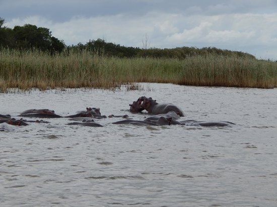 Ocean Basket : hippos at St Lucia