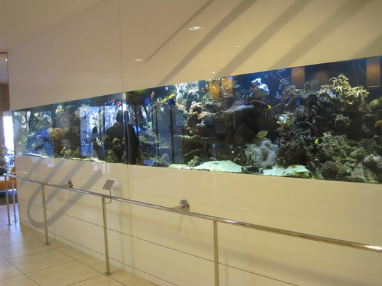 Le Lagon Hotel: Lovely aquarium in lobby of hotel