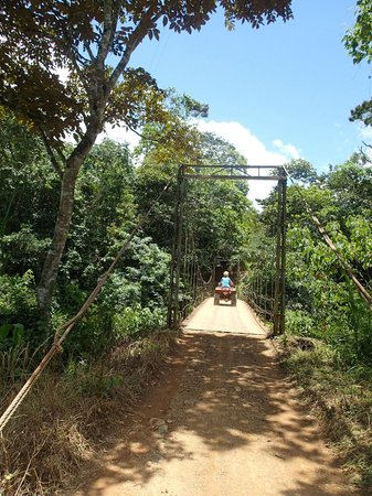 Jungle ATV Quad Tours: Bridge