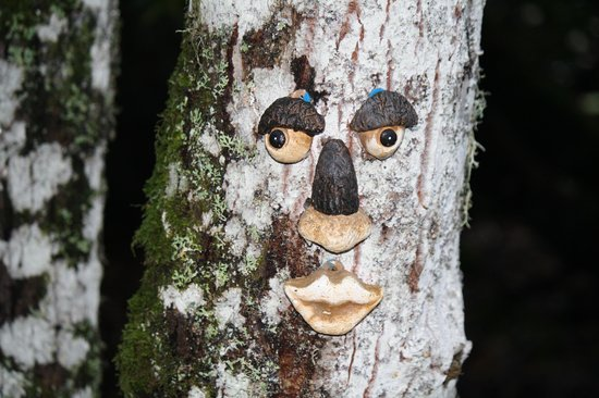 Coul House Hotel: the trees have eyes