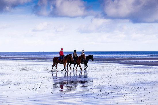 The Cottages: Horses on beach, riding through surf