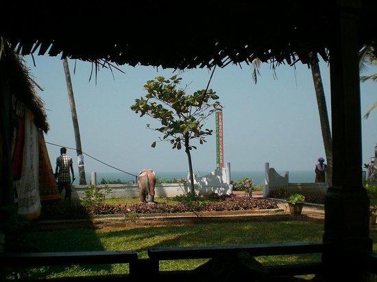 Bamboo Village 사진