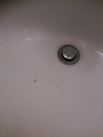 Rodeway Inn Page: lavabo sporco e con un animaletto che girava