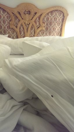 Pearl Continental Hotel Bhurban : Bugs in the beds