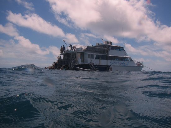 Reef Experience : Boat
