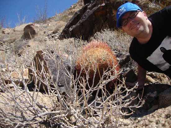 Super 8 Indio : Upclose with a Ferocactus at Joshua Tree National Park