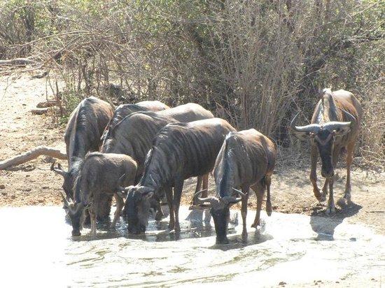 Motswiri Private Safari Lodge: The Waterhole