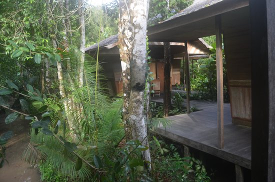 Rimba Orangutan Eco Lodge: Our room at Rimba Lodge