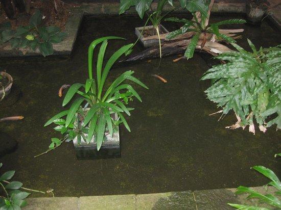 Highbury Colombo: Indoor pond