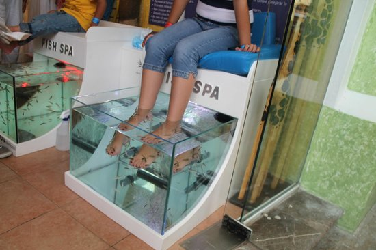 Feet eating fish at the mall picture of fish spa mexico for Fish eat dead skin spa