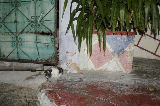 El Centro: wild kittens