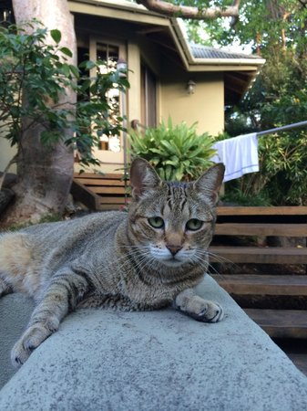 Surfsong Villa Resort: resident kitty
