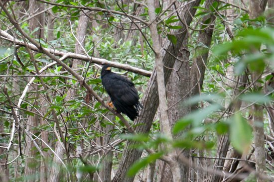 Flamingo Tours: Чёрный орёл