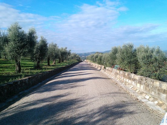 Villa Torre Rossa Apartments: road to the property with olive trees