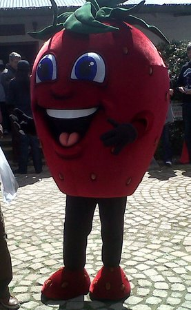 Redberry Farm: Strawberry Festival 2013