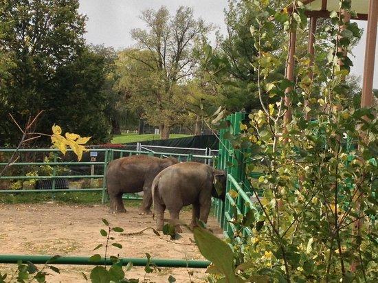 Syracuse, NY: Elephant