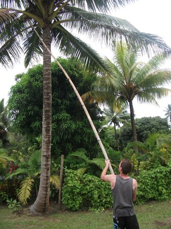 Aremango Guesthouse : Coconut hunting