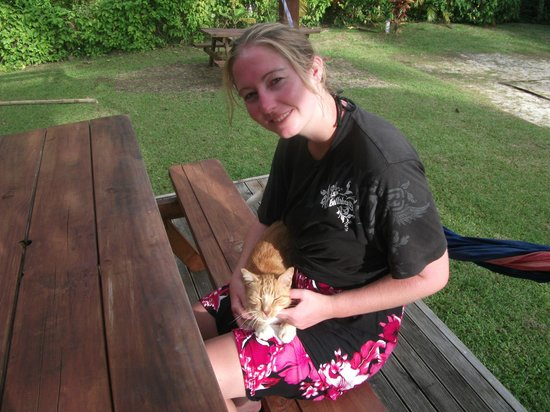 Aremango Guesthouse : The neighbourhood cat that visits at Vaimaanga Studio