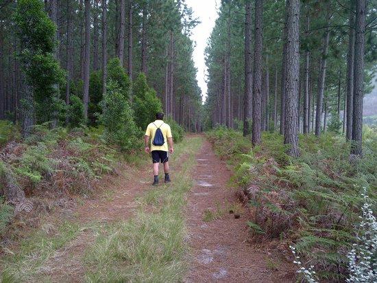 Tsitsikamma Lodge: hiking trails between the pine woods