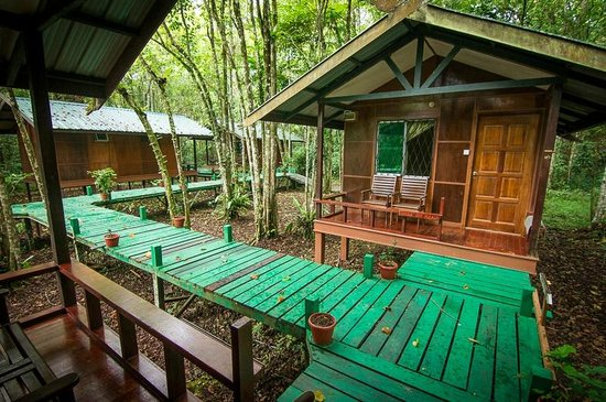 Nature Lodge Kinabatangan : Agamid chalet