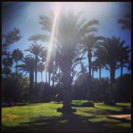 Dar Ayniwen Villa Hotel: Tree