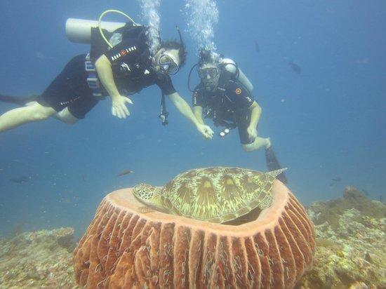 Diving at gili air picture of manta dive gili air gili - Manta dive gili air ...