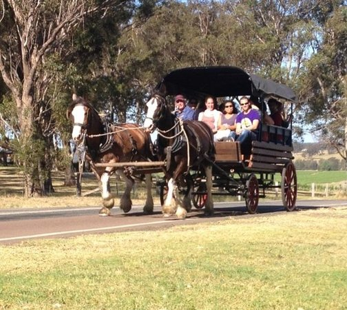 Hunter Valley Horses Carriage Tours