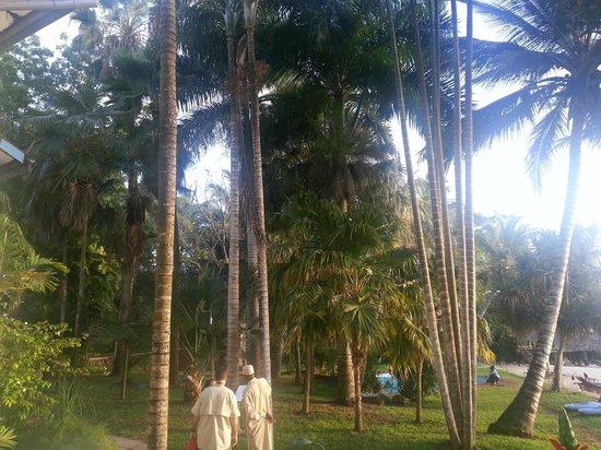 Protea Hotel by Marriott Zanzibar Mbweni Ruins: Inside garden