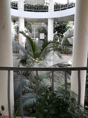 Central Botanical Garden of the National Academy of Sciences of Belarus: Растения тропических зон