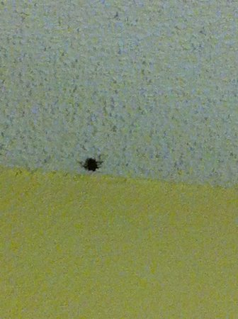 Fairfield Inn & Suites Charlotte Arrowood: First night room mate. About the size of my thumbnail.