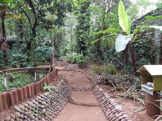 Old Village Spice & Herbal Garden : LE PIANTE