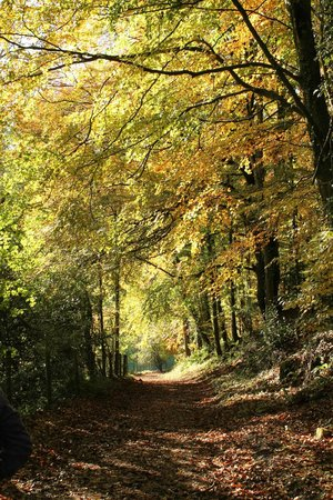 Woodchester Park: Woodland walk
