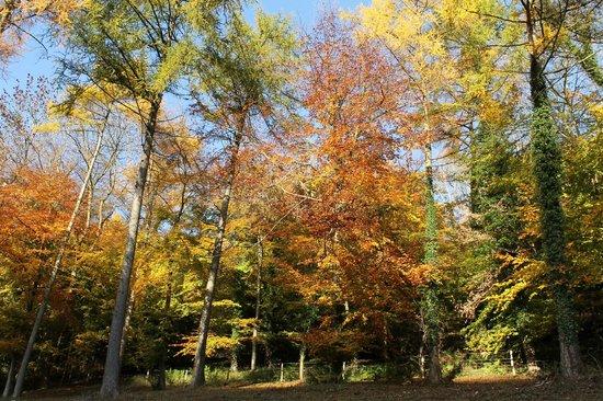 Woodchester Park: Autumn colours