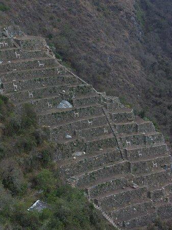 Los Tres Balcones Guesthouse: Las Llamas in agriculture terraces