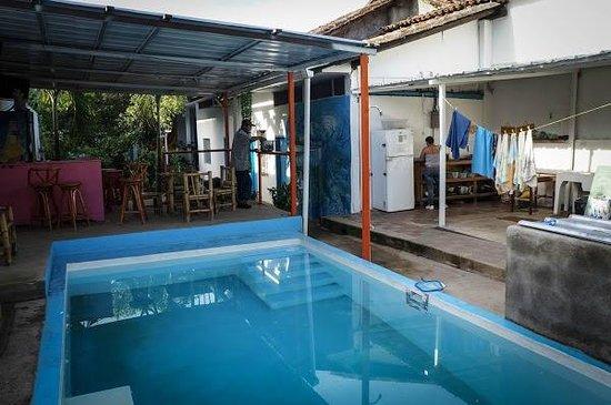 Backyard Hostel: The pool area at Back Yard hostel