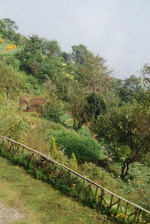 Bhangeri Durbar Resort: The mist is clearing a bit !