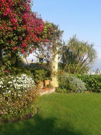Huijs Haerlem : Lovely garden
