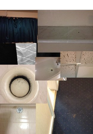 Hotel Lily London - Kensington/Earl's Court: Disgusting